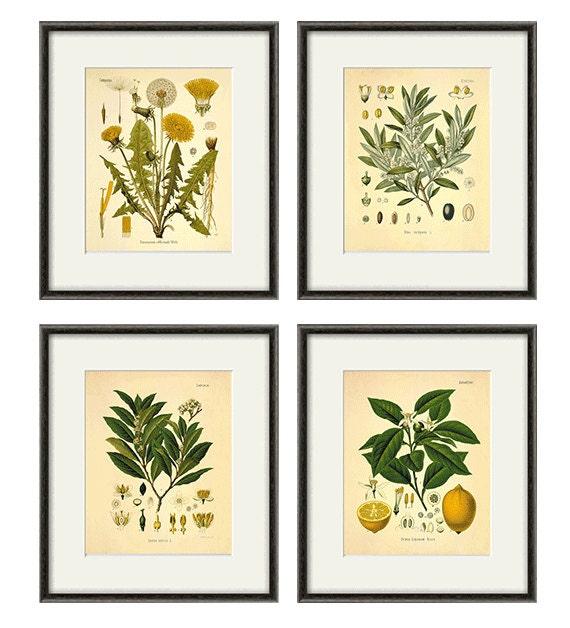 Kitchen Herbs Wall Art Antique Botanical Print Set Of 4 Herb