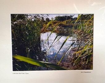 "Pond Scene, Norfolk Countryside, Nature Reserve, Signed Limited Edition A4 Landscape Color Photograph 40cm x 30cm (16"" x 12"") Mount"