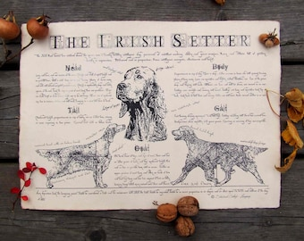 Antique styled dog standard - Irish setter