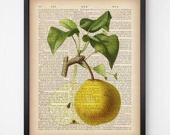 Dictionary print download, Printable dictionary art, Botanical fruit print, Kitchen art, Kitchen print, Pear print, Vintage art print,  JPG