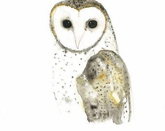 Owl Watercolor Print, Australian Barn Owl Print, Australian Native Bird Watercolour, Woodland Painting, Nature Wall Art