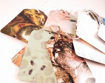 25 Random Wildlife Tags - Repurposed information cards