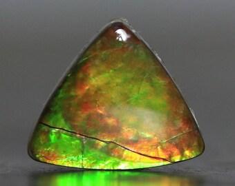 Ammolite Gemstone Fossil Setting Stone (V4283)
