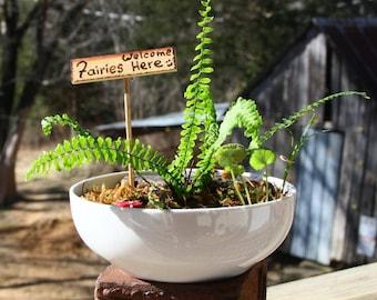 Bowl Terrarium Fairy Garden