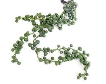 String of Pearls, succulent, artificial succulent, String of Pearls plant, hanging plant, Senecio rowleyanus, faux succulent plant, indoor