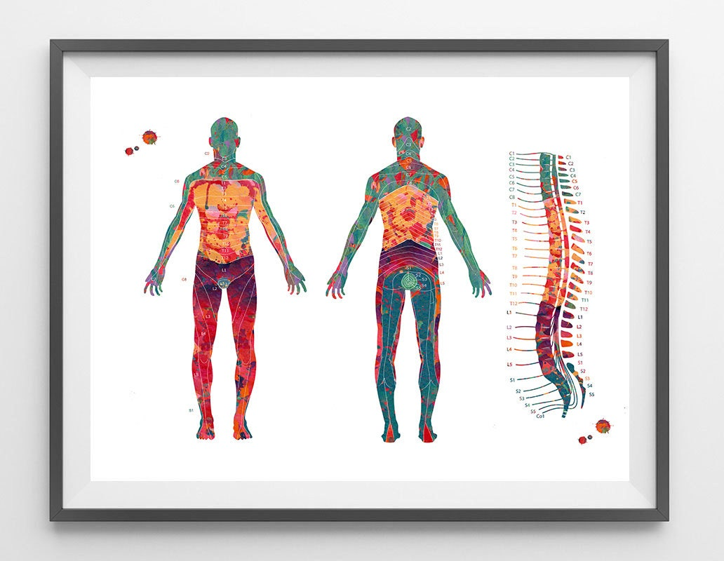 Dermatom Karte Aquarell Druck Wirbelsäule Wirbel und