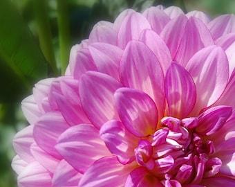 Natures Beauty Lavender Purple Flower Bloom Plant Petals Garden Color Photography Print Canvas Art