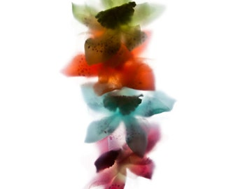 """Multi-coloured Floral Art Print - Flora Impressions - """"Linear Orchids"""" 8x8 inch"""