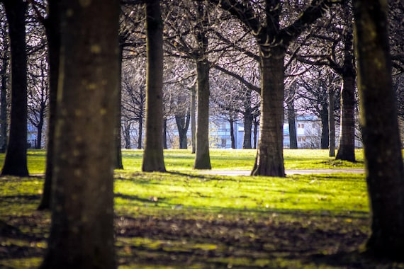 Glasgow, Glasgow Photography, Nature Photography, Glasgow Print, Scotland, Scottish, Wall Art, Wall Decor, City Photography, Park, Trees