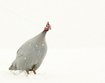 Animal Photography Portrait of a Guinea Hen in the Snow Feather Art Bird Art Archival Photograph