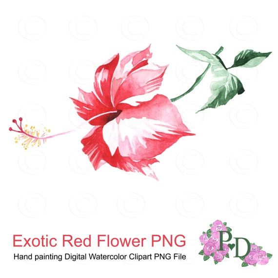 aquarelle exotique rouge fleur clipart png file num rique. Black Bedroom Furniture Sets. Home Design Ideas