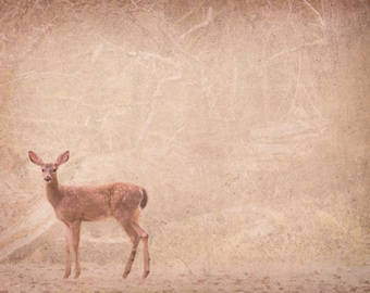 Nature photography, deer in the woods photo fawn doe brown woodland