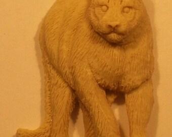 MT Lion face to face