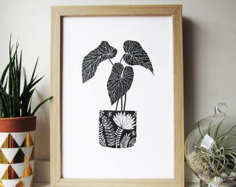 Begonia plant hand drawn illustration. Giclee print A4 size
