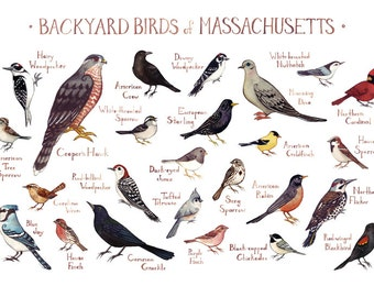 Massachusetts Backyard Birds Field Guide Art Print / Watercolor Painting / Wall Art / Nature Print / Bird Poster