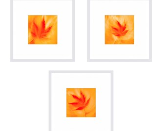 Gift Set - Set of 3 Prints MAPLE LEAVES - Flower Photos - Gift Idea - Housewarming GIft  - Matted Prints by Crionna