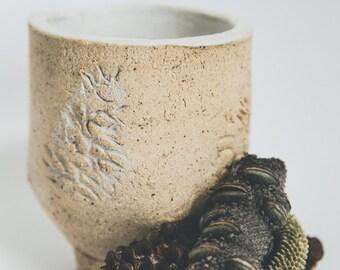 Banksia Teacup