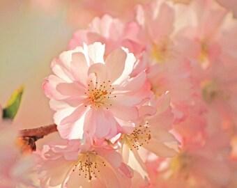 Dream Blossoms ~ ~ Fine Art Print ~ Art print ~ Pink flowers Romantic pastel decorative