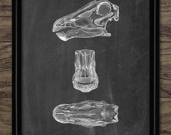 Diplodocus Skull Anatomy - Dinosaur Print - Sauropod Dinosaur - Paleontology - Extinct Animal Art - Single Print #2178 - INSTANT DOWNLOAD
