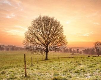 Ashton Court golden frosty morning, Bristol print, photographic print, home wall print, landscape photo print