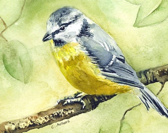 Original  Watercolor Painting of a Warbler 5 x 7