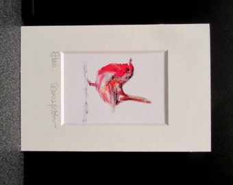 Robin redbreast. Miniature signed art print from an Original painting by Suzanne Patterson.X