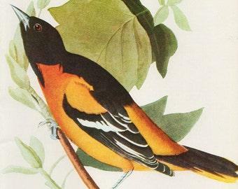 Vintage Antique Birds Prints BIRDS Natural History Antique Illustration 44 birds