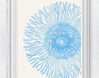 Jellyfish detail  in light blue - coastal house  decoration - Home decor sea life  print- Haeckel illustration A4 print SAS116