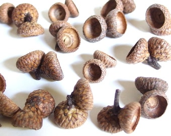 25 Double Acorn Caps - Small, Unfinished Oak Nut Tops J14