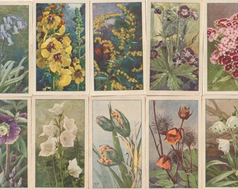 Verkade Flowers in the Garden cards from 1929 in colour 10 cards from scan