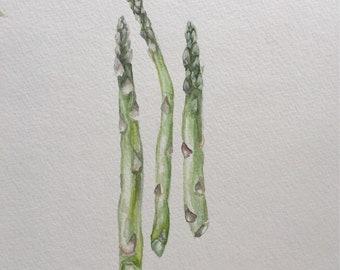 Watercolor Asparagus-Food Art