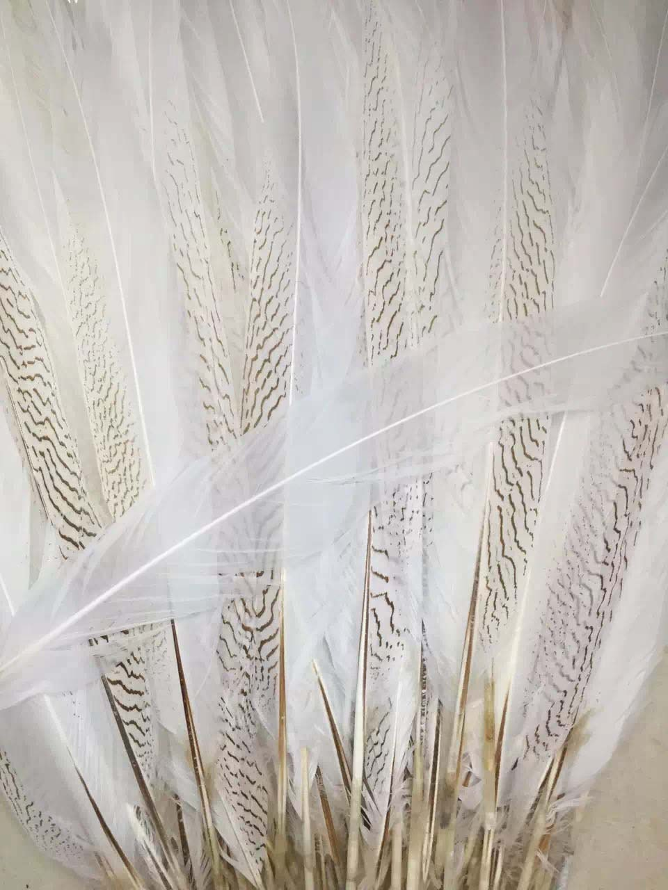 50pieces/lotTop Qu ality White Silver Pheasant Feathers natural ...