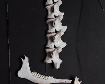 The Pointy End - FREE SHIPPING Surreal Photo Print Fine Art Nature Dark Still life image Creepy Jaw bone from animal Spine Collection Brown