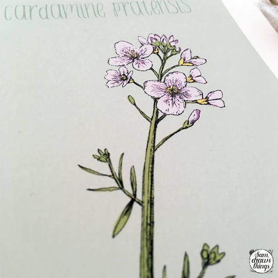 Cuckoo Flower/Lady's Smock art print for the Flower Power Fund