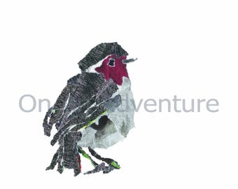 Pack of 4 Christmas Cards 'Mr Robin'