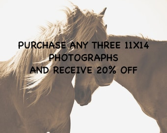 Wild Horse photo.Purchase any three 11x14 photographs and receive 20% off. Select any 3 from my gallery.