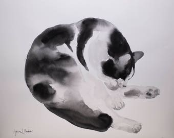 Black and white cat grooming