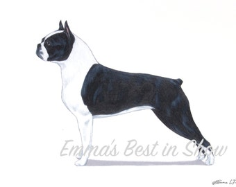 Boston Terrier Dog - Archival Fine Art Print - AKC Best in Show Champion - Breed Standard - Non-Sporting Group - Original Art Print