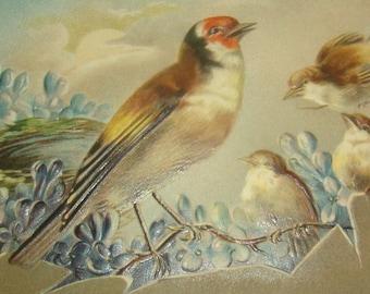 Nice Vintage/Antique Bird Postcard
