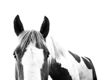 Horse Photography Print // Baby Gift // Western Art // Contemporary Art // Baby Nursery // Black and White Photography // Mid Century Modern