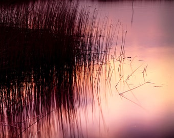Reed beds at sunrise