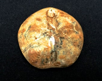 DESTASH. Fossilized Sand Dollar aka Jockeyless Seabiscuit