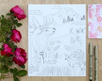 Elk Natural Study Print