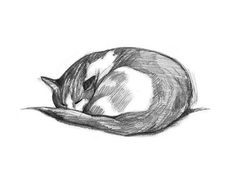 Cat Drawing, Pencil Drawing of Cat, Gift for Cat Lover, Cat Sketch Sleeping, Cat Print, Kids Room Decor, Animal Art, 8 x 10