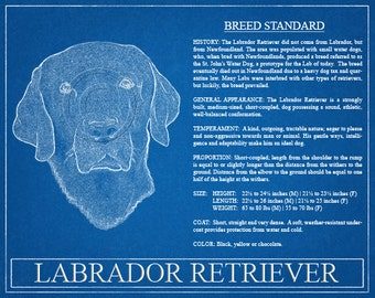 Labrador Retriever Portrait / Labrador Retriever Art / Labrador Retriever Wall Art / Labrador Retriever Print / Labrador Retriever Gift