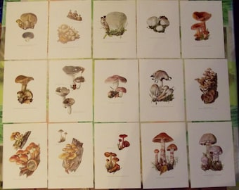 15 antique engraving mushrooms 1960 Art Print on Original Antique 1960 mushrooms Cortinaire exudes Brittlegill, spores, Wolf jacket