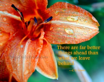 Tiger Lilly with raindrops, C.S. Lewis quote