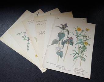 Vintage Botanical Book Pages, Six Page Bundle, Country Diary Of An Edwardian Lady, Edith Holden