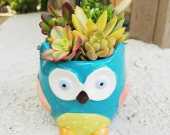 Colorful owl-dorable blue owl pot with living succulent arrangement