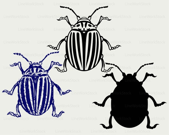 Download Colorado beetle svg/beetle clipart/bug svg/insects ...
